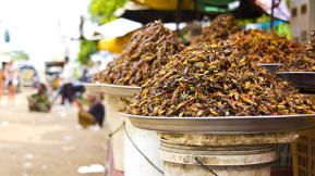 A Grand Plan For Feeding The World With Insects