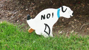 Sending Lazy Dog Owners A Message: Poop In A Box