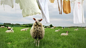 How Great Entrepreneurs Lure Their Competitors' Sheep Away